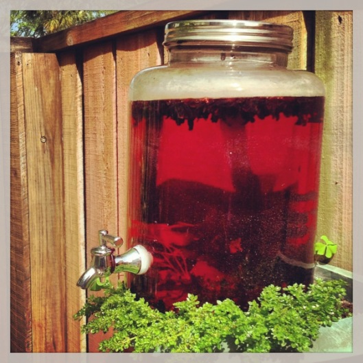 Sun Tea South Florida~Scoche