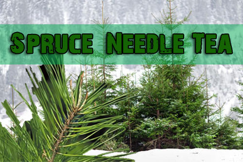 Beautiful Spruce Needle Tea Recipe
